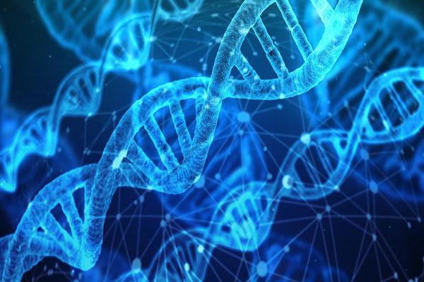 Cấu tạo đoạn phân tử ADN - Sinh học